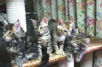 Himefleur_kittens1019a1