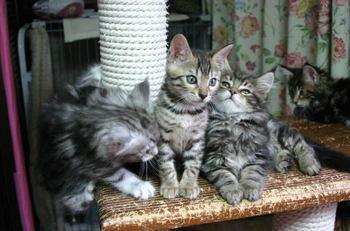 Himefleur_kittens1019b1