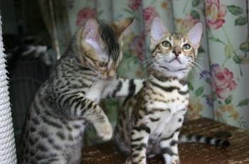 Fleur_kittens1120a1