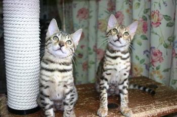 Fleur_kittens1120d1