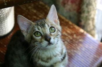 Fleur_kittens1121b1