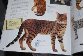 Cat_a1