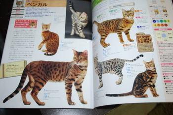 Cat_b1