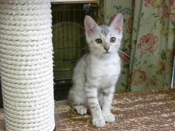Precious_kitten0202a1