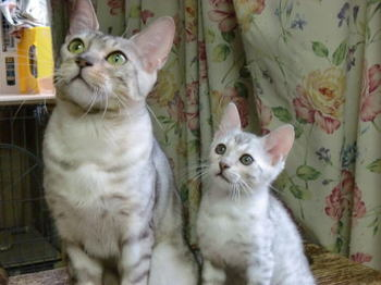 Precious_kitten0202b1